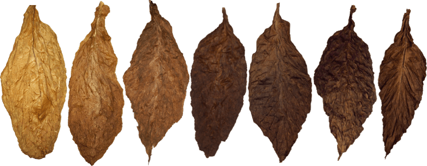 Comparison of Cigar Wrappers