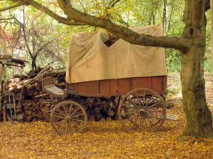covered wagon, pioneer, cigar history, cigars, cigar, origin of cigar, linguistic origin of cigar, linguistic, linguistic history, wagon, pioneers, pioneer, pioneer wagon, the oregon trail